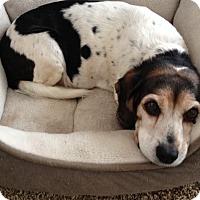Adopt A Pet :: Maude - Cedar Rapids, IA