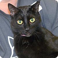 Adopt A Pet :: Ali - Medina, OH