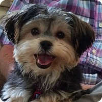 Adopt A Pet :: Koda - North Port, FL