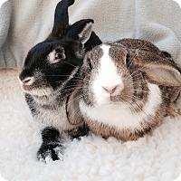 Adopt A Pet :: Dawson & Dax - Watauga, TX