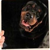 Adopt A Pet :: Eden - Gilbert, AZ