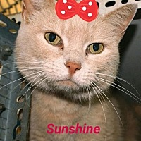 Adopt A Pet :: Sunshine - Marion, KY