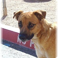 Adopt A Pet :: Momma Dog - Las Vegas, NV