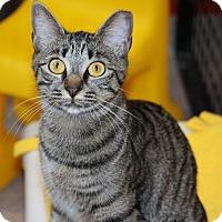 Adopt A Pet :: Coral - Sarasota, FL