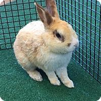 Adopt A Pet :: Coco - Chula Vista, CA