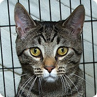 Adopt A Pet :: Max M - Sacramento, CA