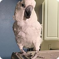 Adopt A Pet :: Sydney - Tampa, FL
