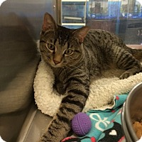 Adopt A Pet :: Smokey - Byron Center, MI