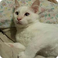 Adopt A Pet :: Marshmello - Royal Palm Beach, FL
