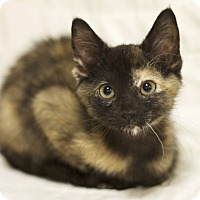 Adopt A Pet :: Sweet Pea - Sioux Falls, SD