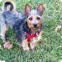 Adopt A Pet :: Coco - Haggerstown, MD