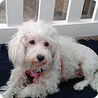 Adopt A Pet :: Tabatha - Thousand Oaks, CA