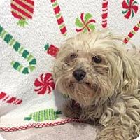Adopt A Pet :: I1265015 - Pomona, CA
