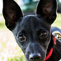 Adopt A Pet :: Gypsy's Raven - Miami, FL