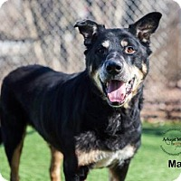 Adopt A Pet :: Max - Kansas City, MO