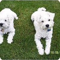Adopt A Pet :: Clyde - Alliance, NE