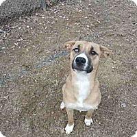 Adopt A Pet :: Coda - Gadsden, AL