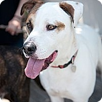 Adopt A Pet :: Cisco - Santa Monica, CA