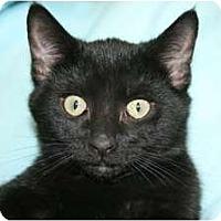 Adopt A Pet :: Peanut - Frederick, MD
