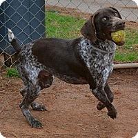 Adopt A Pet :: Pogo - Athens, GA