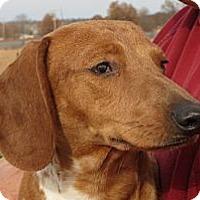 Adopt A Pet :: Alexandria - Greenville, RI
