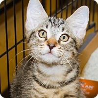 Adopt A Pet :: Little Jerry - Irvine, CA