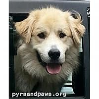 Adopt A Pet :: Plymouth in NH - Ascutney, VT