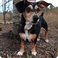 Adopt A Pet :: Spring - Wakefield, RI