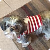 Adopt A Pet :: Kaylee - Schofield, WI