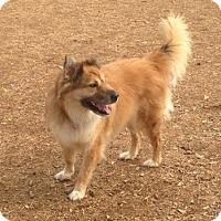Adopt A Pet :: Ruby Loo - Scottsdale, AZ
