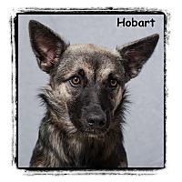 Adopt A Pet :: Hobart - Warren, PA