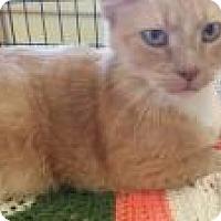 Adopt A Pet :: Diego - Putnam, CT