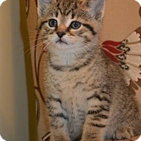 Adopt A Pet :: U Litter - Otis - Williamston, MI