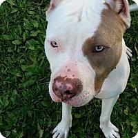 Adopt A Pet :: Buttercup - Villa Park, IL