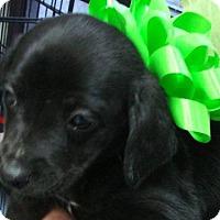 Adopt A Pet :: Madame - Erwin, TN