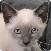 Adopt A Pet :: Amber - Redondo Beach, CA