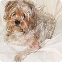 Adopt A Pet :: Freddy - Umatilla, FL