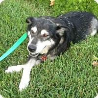 Adopt A Pet :: Angus - Enfield, CT
