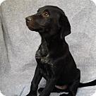 Adopt A Pet :: Trista