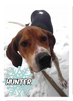 Treeing Walker Coonhound Dog for adoption in Des Moines, Iowa - Hunter