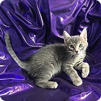 Adopt A Pet :: Eiffel - Tampa, FL