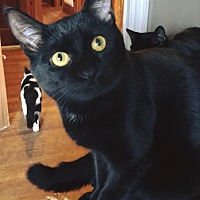 Adopt A Pet :: TOBY - Burlington, NC