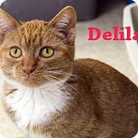 Adopt A Pet :: Delilah - Hamilton, MT