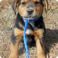 Adopt A Pet :: Kevin - Allentown, NJ