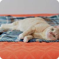 Adopt A Pet :: Brie - St. Louis, MO