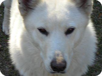 German Shepherd Dog Dog for adoption in Daleville, Alabama - Misty