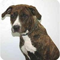 Adopt A Pet :: Rhoda - Port Washington, NY