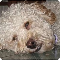 Adopt A Pet :: Lenny - Rigaud, QC