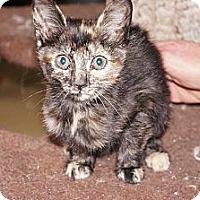 Adopt A Pet :: Vanessa - Tarboro, NC