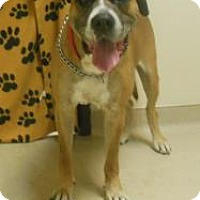 Adopt A Pet :: Dryfest - Gary, IN
